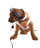 Musical  Ridgeback Stock Images