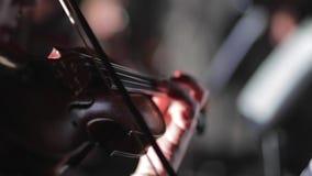 Musicant spelar fiolen stock video