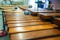 Xylophone, marimba or mallet player with sticks,. Musician in action with percussion instrument during a concert or performance Stock Images