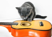 Musician. Gray kitten playing with a guitar. Gray kitten playing with a guitar on a white background stock photo