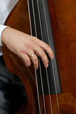 Musician hand playing the contrabass Stock Image