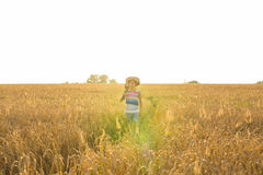 Musician holding acoustic guitar and walking in summer fields at sunset Royalty Free Stock Photography