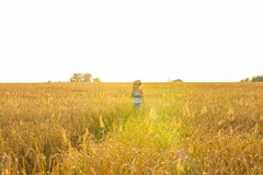 Musician holding acoustic guitar and walking in summer fields at sunset Royalty Free Stock Image