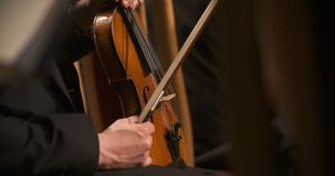 Musician holding violin. Close-up of musician holding violin, classic music background. Male musician playing cello on musical event stock video