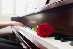 Musician playing piano with red rose flower with vintage filter.  Royalty Free Stock Image