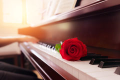 Musician playing piano with red rose flower with vintage filter.  Stock Photo
