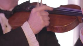 Musician plays fingers the violin, a classical musical instrument stock video