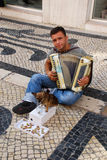 Musician with small cute dog play accordion Royalty Free Stock Photo