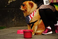 Musicien de rue avec son chien modèle images libres de droits