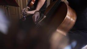 Musicista che gioca su un primo piano del contrabbasso stock footage
