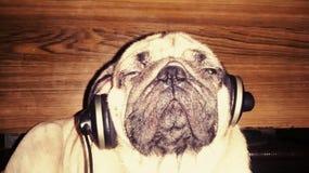 Musik är min drog Royaltyfri Bild