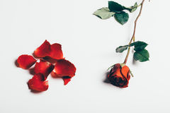 Musik noterar i hjärtan Royaltyfria Foton