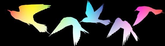 Musik wird durch die Schattenbilder der Vögel auf dem Schwarzen dargestellt Lizenzfreies Stockfoto