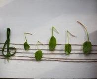 Musikalische Anmerkung von den grünen Blättern, weißer Hintergrund Stockfotografie