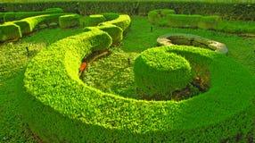 Musikalischer grüner Gartengetreidekreis Stockfotos