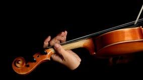 Musiker som spelar fiolen stock video