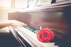 Musiker som spelar pianot med den röda rosblomman royaltyfria bilder