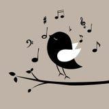 Musikfågel Arkivbild