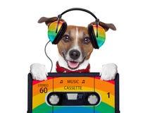 Musikhund Stockfoto