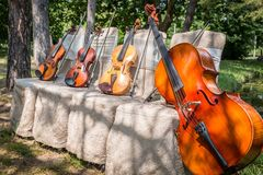 Musikinstrument i natur Arkivfoton