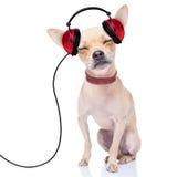 Musique de chien Images stock
