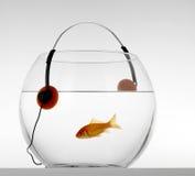 Musique rouge de listenig de poissons Photos libres de droits