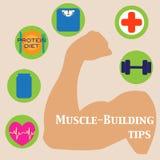 Muskel-byggnad uppsättning Royaltyfri Bild