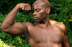 Muskel und zweiköpfiger Muskel stockfotografie