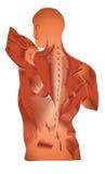 Muskeln stock abbildung