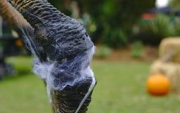 Muskelskarv av ett ben mycket av spindelnät royaltyfria foton