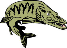 鱼muskie 库存例证