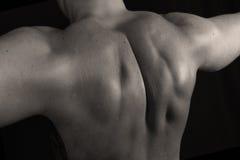 muskler royaltyfri foto