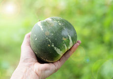 Muskmelon in hand Royalty Free Stock Image