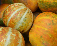 Muskmelon Stock Photos