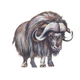 Muskox Royalty Free Stock Photography