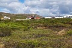 Muskox Tundra στοκ εικόνα με δικαίωμα ελεύθερης χρήσης