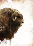 Muskox Watercolor Στοκ φωτογραφίες με δικαίωμα ελεύθερης χρήσης