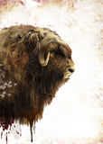Muskox Watercolor Royalty Free Stock Photos