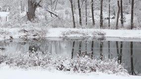 Muskrat swimming across a snowy pond. stock video