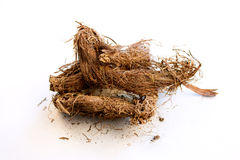 Muskroot, Spikenard indien (Jatamanshi) Photos stock