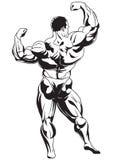 Muskulös kroppsbyggare Arkivbild