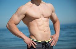 Muskulös Torso Royaltyfri Fotografi