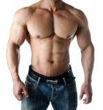 Muskulös torso, pecs, abs och armar av den manliga kroppsbyggaren Fotografering för Bildbyråer