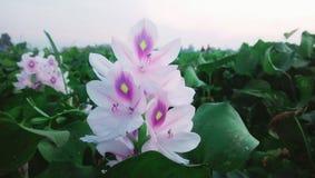 Muskulösa blommor bd arkivbild
