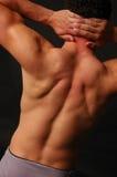 Muskulöse Mannesrückseite Stockfotografie