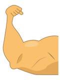 Muskulöser Arm Stockbild