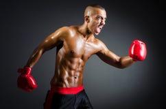 Muskulöser Boxer Stockfotografie