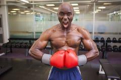 Muskulöser Boxer, der Muskeln im Fitnessstudio biegt Lizenzfreie Stockfotografie