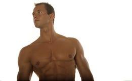 Muskulöser Erbauer der männlichen Karosserie Stockfotografie
