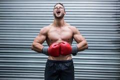 Muskulöser schreiender Boxer Stockfotografie